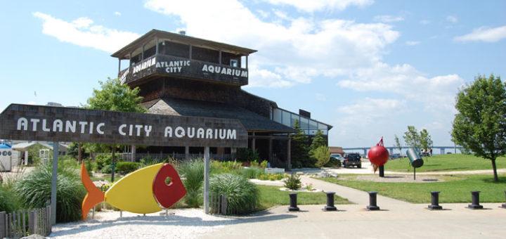 Atlantic city Aquarium - Things To Do in Atlantic City